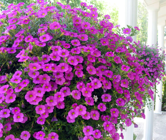 Frontflowersweb