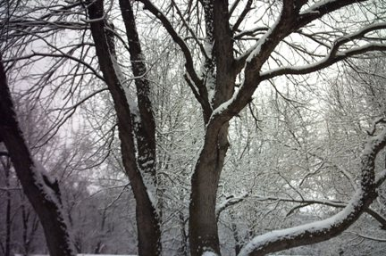 March17snowtree